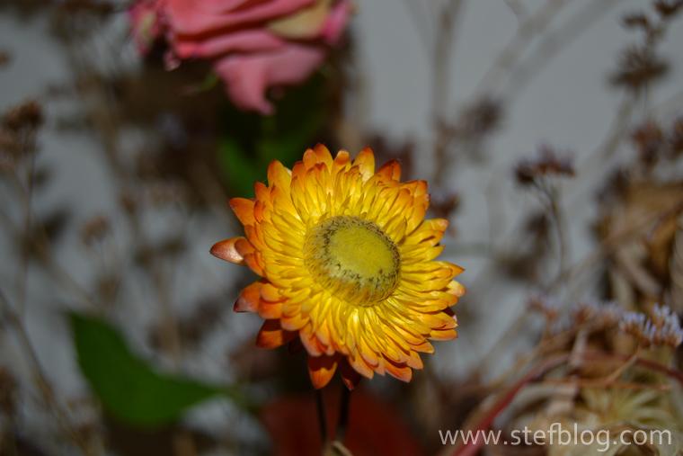 Natura-moarta-floare-galbena