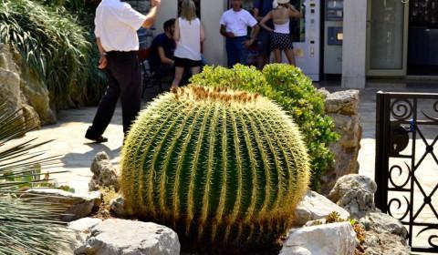 cactus-iesirea-din-gradina-exotica-din-monte-carlo