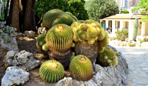 familie-cactusi-gradina-exotica-monaco