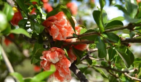 Flori interesante