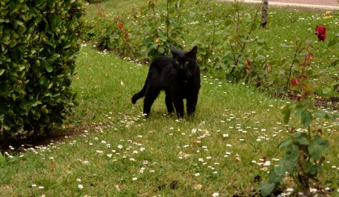 Mâță Neagră - Parcul Centra din Zaragoza
