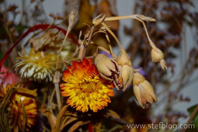 natura-moarta-flori