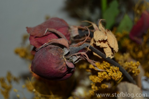 natura-moarta-trandafir