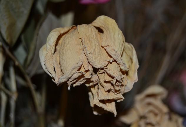 natura-moarta-trandafir-alb