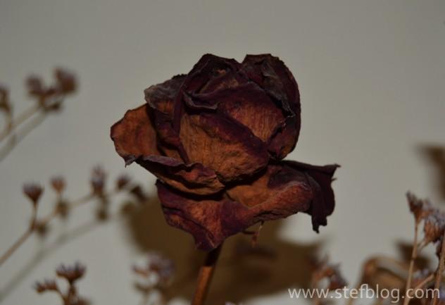 natura-moarta-trandafir-rosu