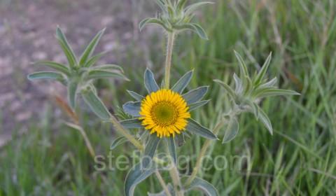 planta-cu-floare