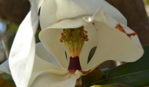 structura-florii